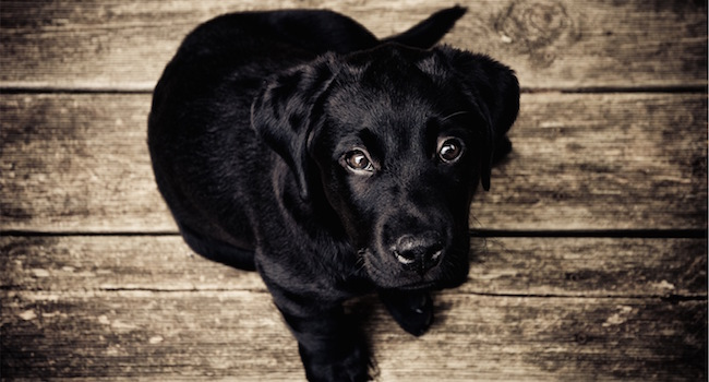 Image of dog looking for help